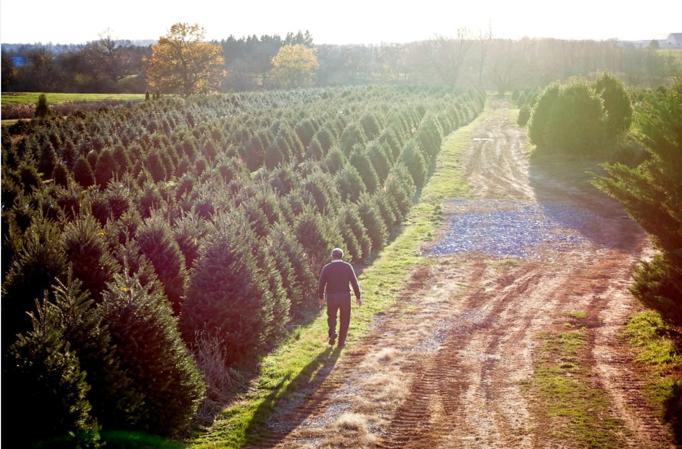 Lebanon Live Christmas Tree Farm
